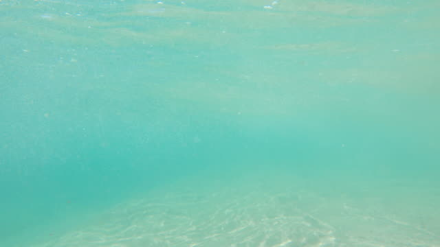 cabo underwater - gopro stock videos & royalty-free footage
