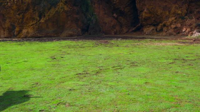 vídeos de stock e filmes b-roll de cabárceno natural park, pisueña valley, municipality of penagos, cantabria, spain, europe - grupo pequeno de animais