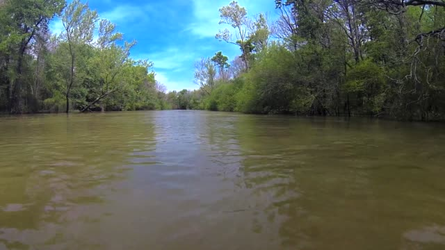 cache river, arkansas - arkansas stock videos & royalty-free footage
