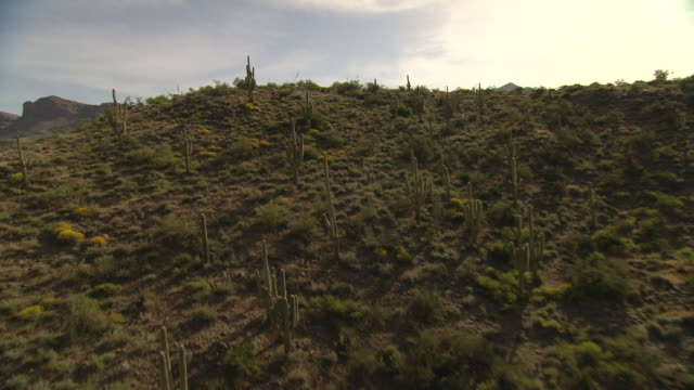 Cacti and scrub brush grow on desert hills and plains.