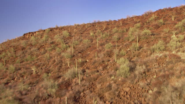 Cacti and shrubs cover a hill. Available in HD.