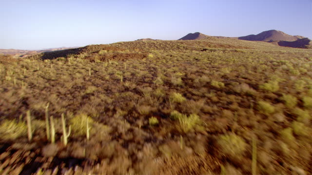 cacti and shrubs cover a hilly landscape. available in hd. - cactus stock videos & royalty-free footage