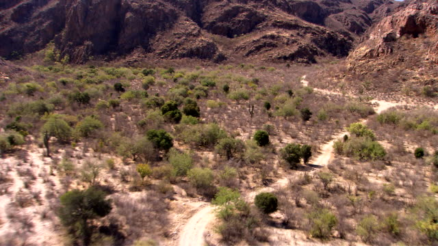 Cacti and shrubs grow in the rugged desert of Sonora, Mexico. Available in HD.