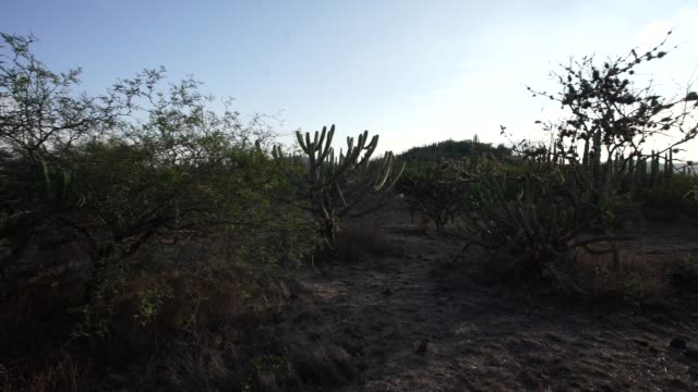 cacti at mexican desert - mexican american stock videos & royalty-free footage