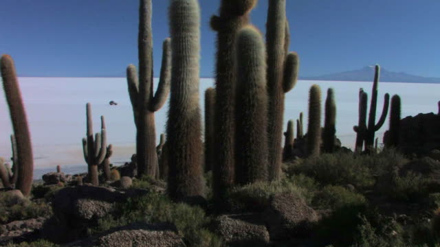 ws pan cacti in foreground and suv driving right on the salar de uyuni / daniel campos, potosi, bolivia - cactus stock-videos und b-roll-filmmaterial