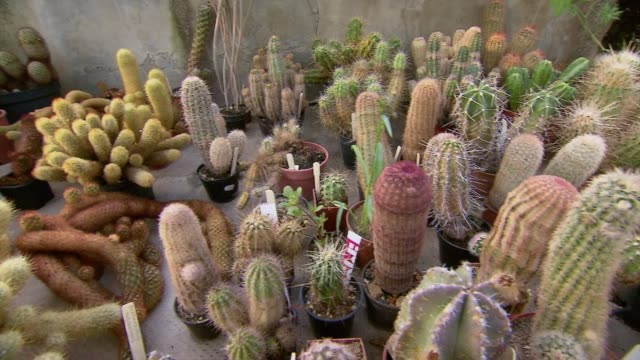 cacti in greenhouse - composition stock videos & royalty-free footage