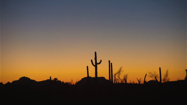 Cacti stand in silhouette against a blue and orange sky.