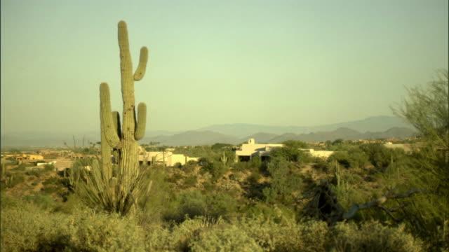 WS, Cactus and shrubs in desert, Phoenix, Arizona, USA