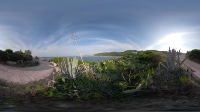 360 vr / cactus at baia san nicola bay at the adriatic sea - adriatic sea stock videos & royalty-free footage