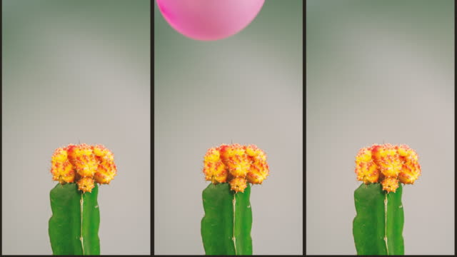 cactus contra balloon - sharp stock videos and b-roll footage