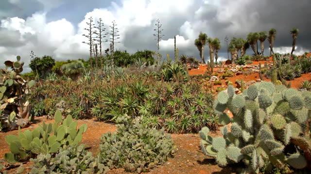 Cactus Countryside