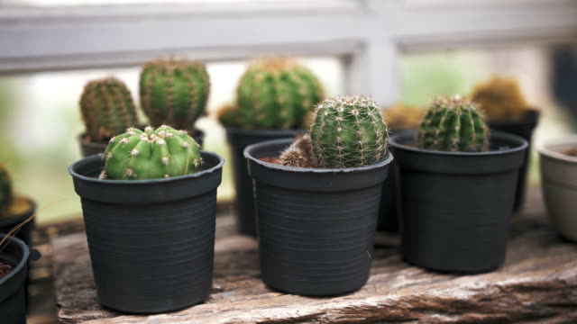 cactus decor - succulent plant stock videos & royalty-free footage
