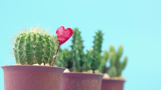 kaktus-dekor - fensterrahmen stock-videos und b-roll-filmmaterial