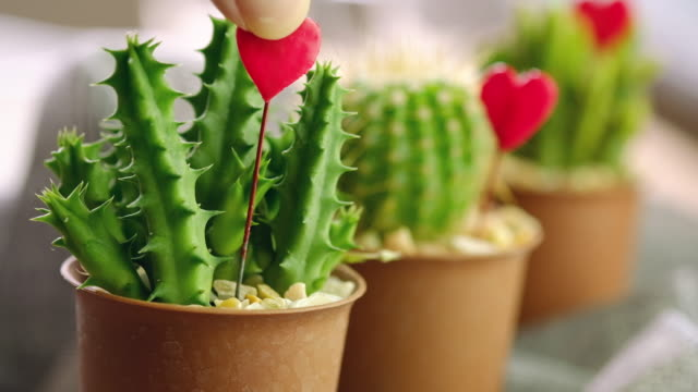 cactus decor - cactus sunset stock videos & royalty-free footage