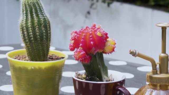 vidéos et rushes de décoration cactus - éléments de décoration intérieure