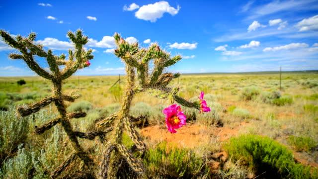 vídeos y material grabado en eventos de stock de cactus desert, nuevo méxico en primavera - cactus saguaro