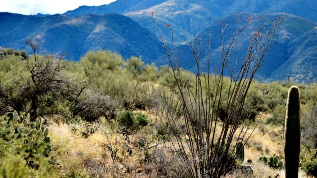 サボテン砂漠、ツーソン、アリゾナ州 - とげ点の映像素材/bロール