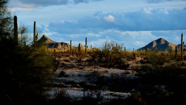 サボテン砂漠、ツーソン、アリゾナ州 - 多肉植物点の映像素材/bロール