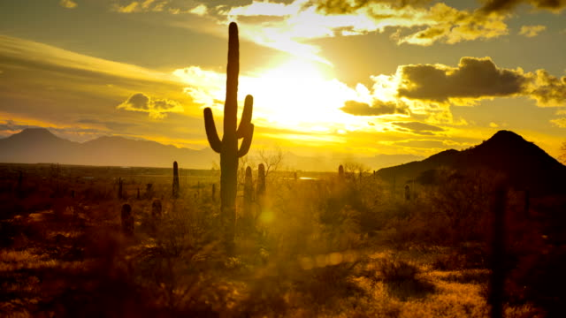 cactus desert - cactus sunset stock videos & royalty-free footage