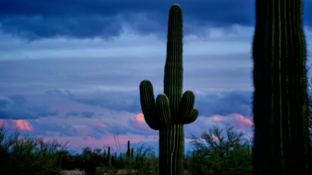 vídeos y material grabado en eventos de stock de desierto de cactus - cactus saguaro