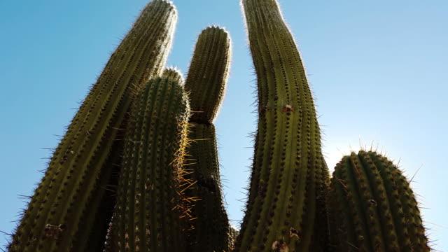 cactus en tafi del valle tucuman argentina with flare - cactus silhouette stock videos & royalty-free footage