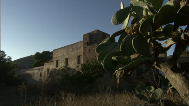 a cactus grows near a building in the mountains of greece. - cactus texture stock videos & royalty-free footage