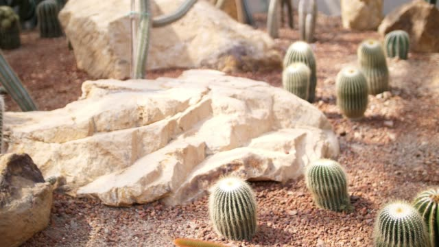 cactus in greenhouse - barrel cactus stock videos and b-roll footage