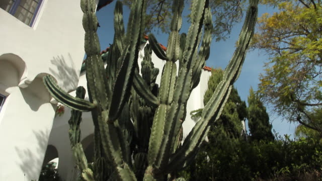 vidéos et rushes de cactus in residential neighborhood - plante grasse