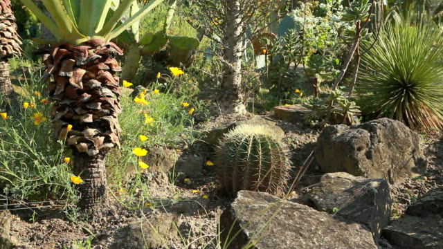 cactus landscape - succulent plant stock videos & royalty-free footage
