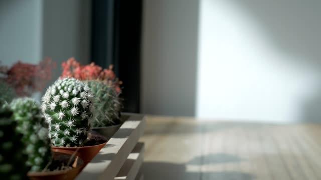 stockvideo's en b-roll-footage met cactus op de tafel door de venster en de ochtend zon. - kleurtoon