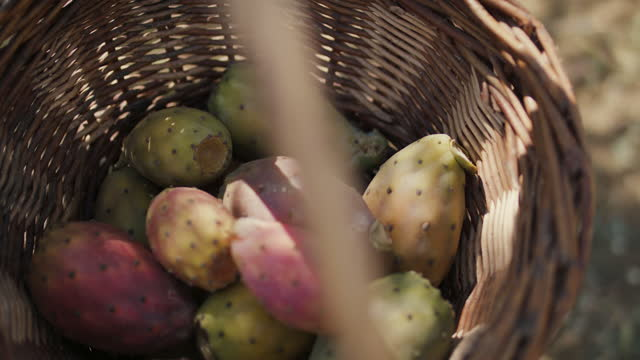 cactus pears in basket - prickly pear cactus stock videos & royalty-free footage
