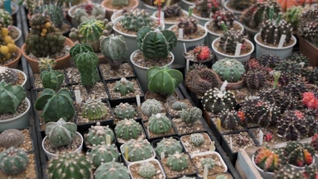 サボテンの植物は鉢に植えられている - 豊富点の映像素材/bロール