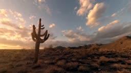 Cactus tree desert time lapse footage during sunset