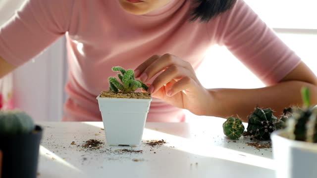 kaktus. - nadel pflanzenbestandteile stock-videos und b-roll-filmmaterial