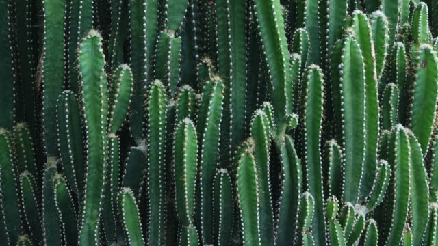 cactus - cactus video stock e b–roll