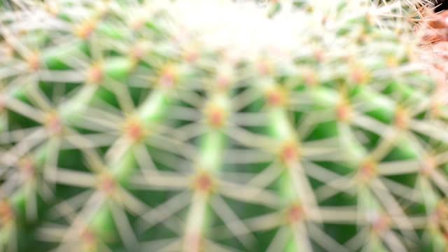 vídeos y material grabado en eventos de stock de cactus - cactus saguaro