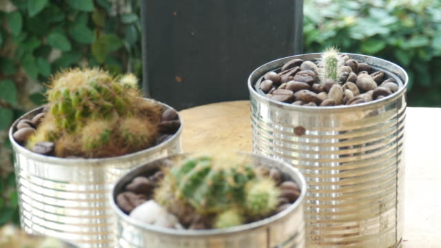cactus - houseplant stock videos and b-roll footage