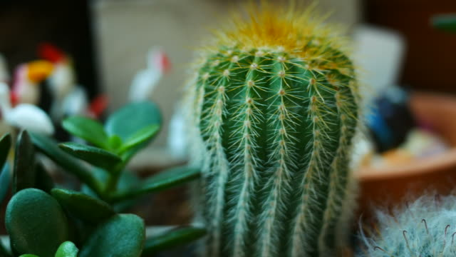 cactus - still life stock videos and b-roll footage