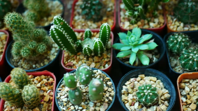 cactus - cactus stock videos & royalty-free footage