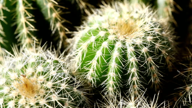 cactus - sharp stock videos and b-roll footage
