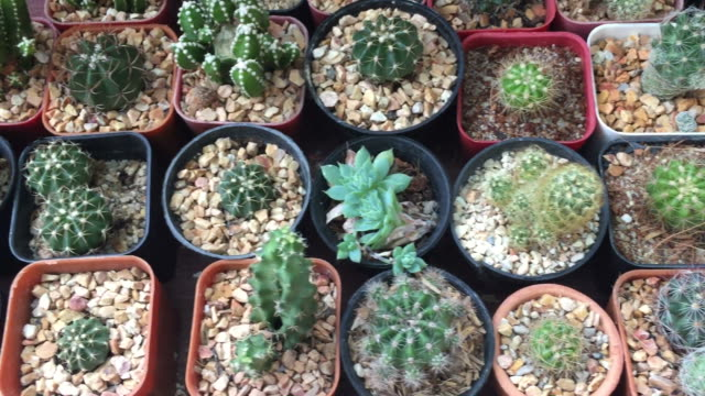 cactus - succulent plant stock videos & royalty-free footage