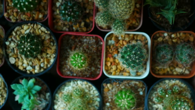 cactus - potting stock videos and b-roll footage