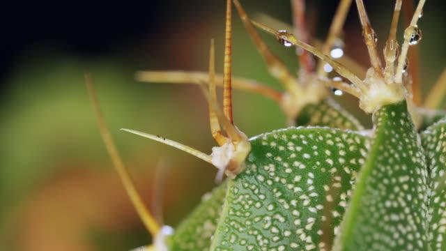 cactusclose1