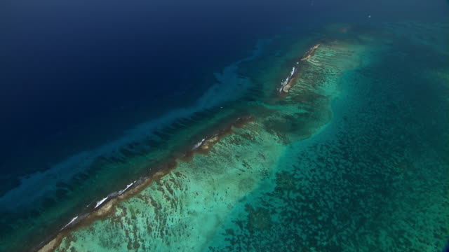 cades reef in the caribbean sea near antigua. - reef stock videos & royalty-free footage