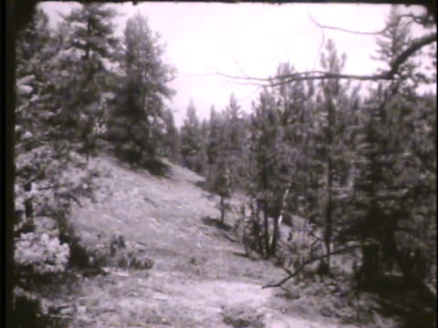 stockvideo's en b-roll-footage met cadets hiking through pike national park , cadets by makeshift tent in forest. colorado, co, rampart range, survival training - kadet