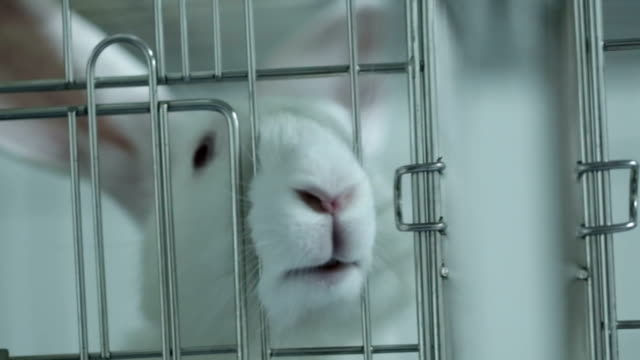 cage for rabbit in the lab - cage stock videos & royalty-free footage