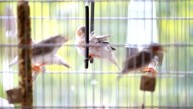 Caged Birds
