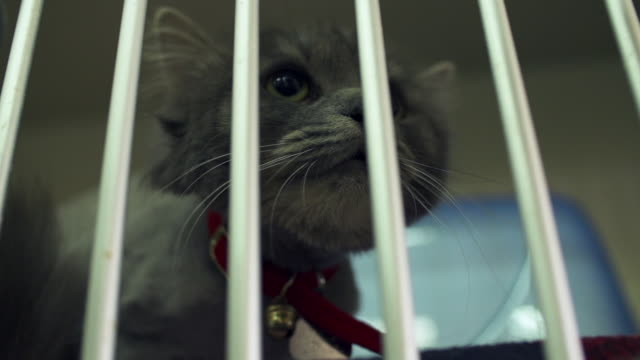 Caged cat in animal shelter