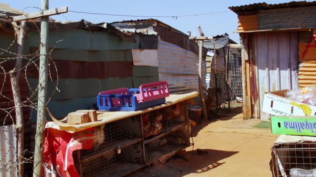 MS Caged chickens surrounded by corrugated iron shacks / Cosmo City, South Africa