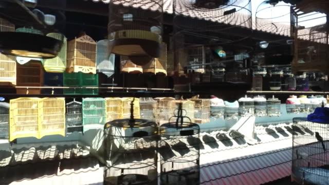 caged songbirds on sale at a market in jakarta, indonesia - gabbia per gli uccelli video stock e b–roll